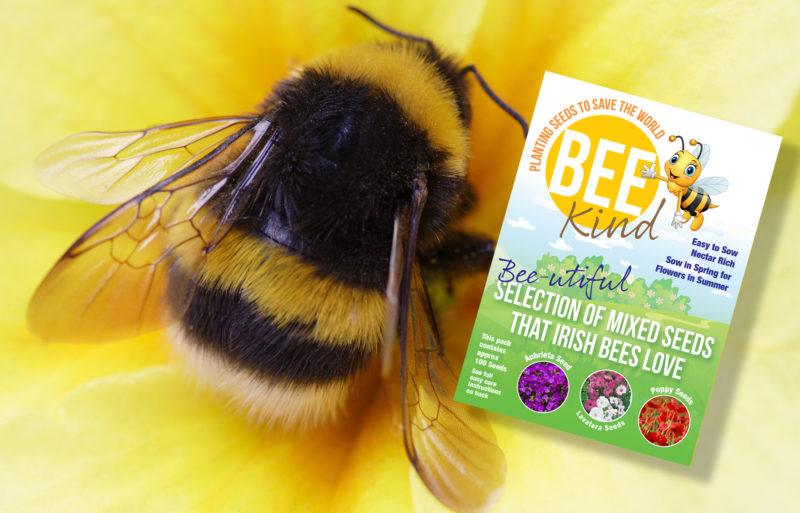 Single pack Bee Kind Seeds